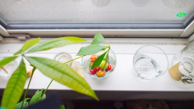 夏場の遮熱効果抜群!グリーンカーテンはゴーヤよりおしゃれなオキナワスズメウリがおすすめ。